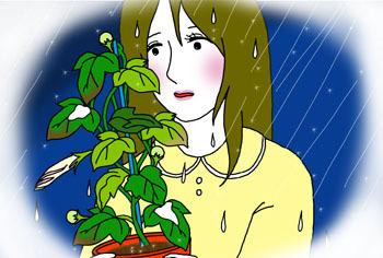 2013-11-amenohi.jpg