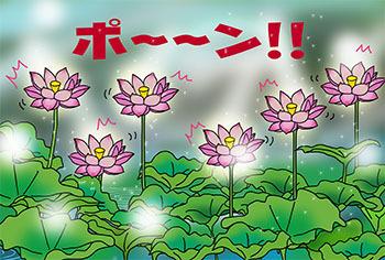 2016-9-kaika.jpg